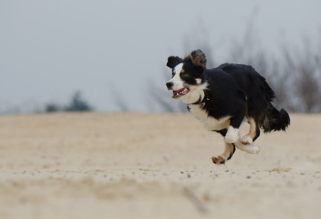A small dog running - that's what people should do when financial advisor coaches do coaching without an application